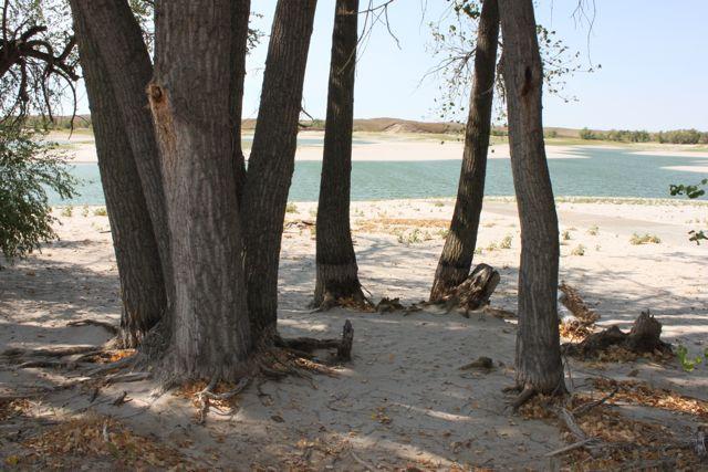 Trees at Merritt Reservoir